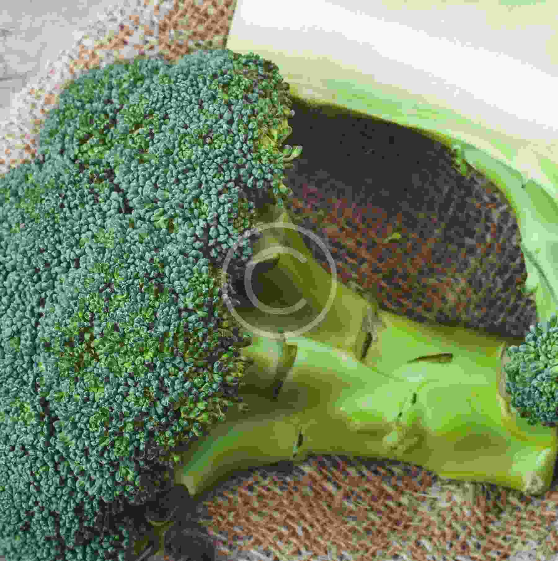 Broccoli is king, no matter what the weather is